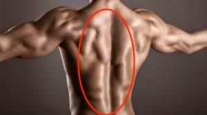 背中の筋肉を徹底解剖!脊柱起立筋