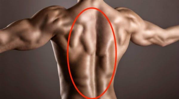 腕立て伏せで鍛えられる部位②背筋(脊柱起立筋)