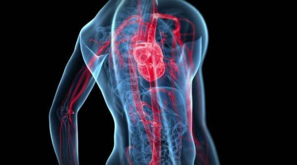 太ももと鍛えるメリット②血液循環が良くなりむくみにくい体になる