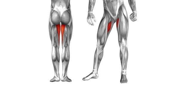 内転筋(太ももの内側の筋肉)