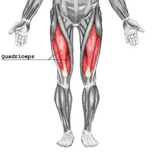 スクワットで鍛えられる部位①大腿四頭筋