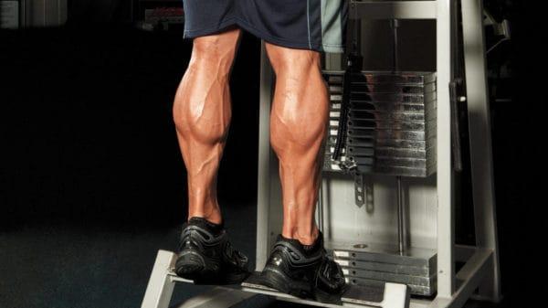 スクワット効果で鍛えられる筋肉:ヒラメ筋&腓腹筋