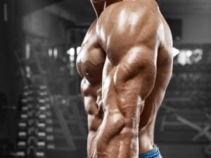 プッシュアップバーで鍛えられる筋肉 上腕三頭筋(腕の裏側)