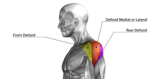 三角筋前部(肩の前)