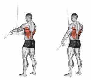背中の筋肉を徹底解剖!広背筋