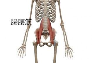 プランクの効果①体幹の強化 腸腰筋