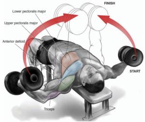 ダンベルフライが大胸筋のバルクアップ・筋肥大に最適な理由