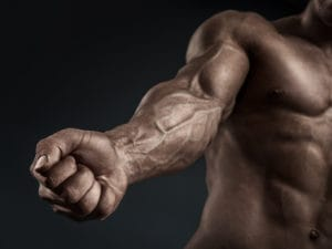 上腕筋(上腕二頭筋の深部に位置する筋肉)