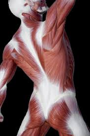 筋膜リリースとは?