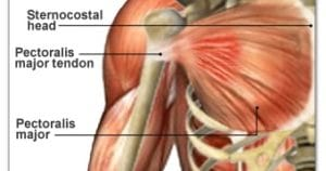 肩周りの腱損傷は特に注意が必要