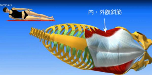 ウエストのくびれを作る、腹斜筋とは