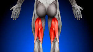 ハムストリングは具体的にどこの筋肉を指すのか?