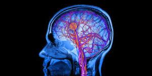 クレアチンの効果⑥「脳機能のサポート」