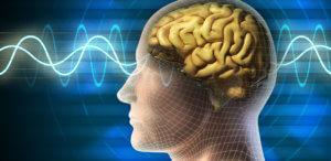 プロテインの効果③脳の機能を向上させる