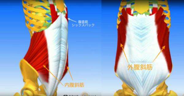 脇腹のくびれ作りは腹斜筋の攻略から