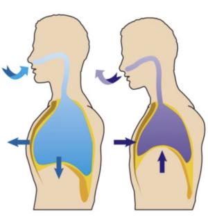腹筋トレーニングの効果的なコツ「呼吸を順番を意識する