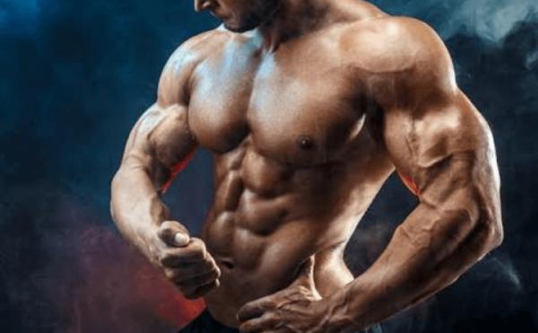 ハンマーカールで特に鍛えることができる「上腕筋・腕橈骨筋」とはどんな筋肉?