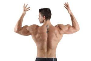 ストレートアームプルダウンの筋トレ効果①「広背筋を集中的に鍛えることができる唯一の種目」
