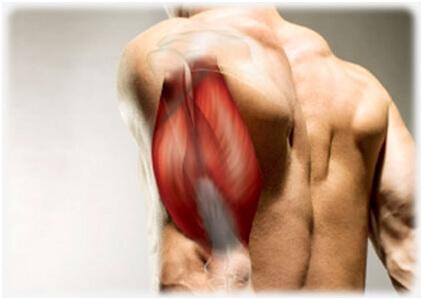 トライセプスキックバックの筋トレ効果①「たくましく太い腕が手に入る」