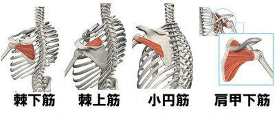 「ローテーターカフ(回旋筋腱板)」の強化