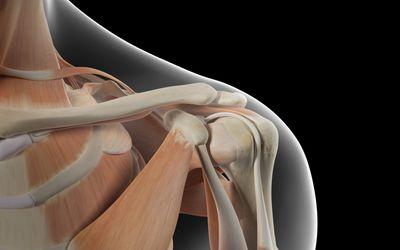 「肩関節」の概要