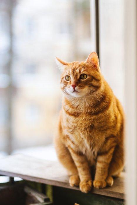 猫背には種類がある