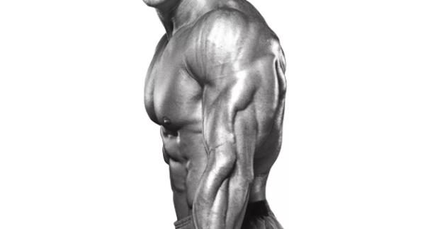 上半身の主要な筋肉③「上腕三頭筋」