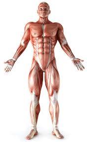大きな筋肉を鍛えるメリット①「高い筋力増強効果」