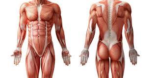 体積の大きい筋肉を鍛える筋トレ効果とは?