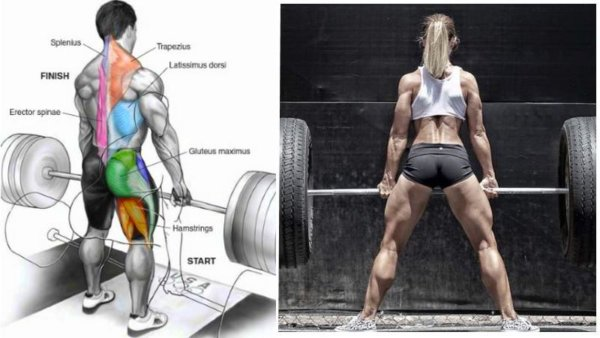 複数の筋肉を同時に鍛えられる