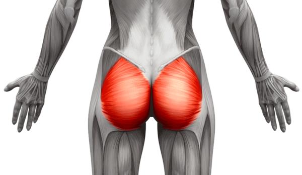 体積の大きいカラダの筋肉③「大臀筋(864c㎥)」