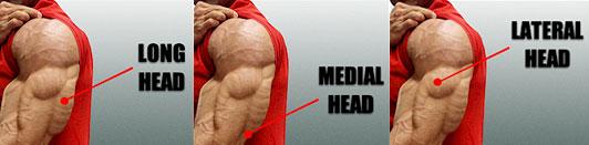 「長頭・外側頭・内側頭」それぞれに特化した鍛え方のコツ