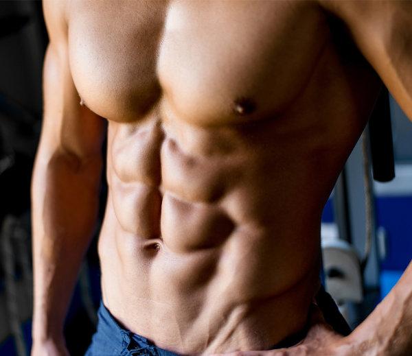 上半身の主要な筋肉⑦「腹直筋」