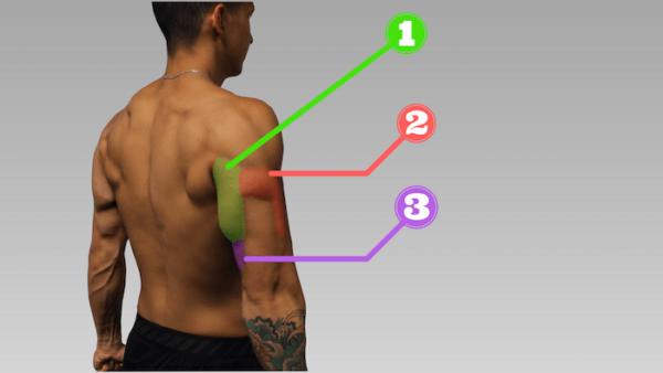 「上腕三頭筋」を鍛えるおすすめなトレーニング