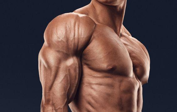 体積の大きいカラダの筋肉④「三角筋(792c㎥)」