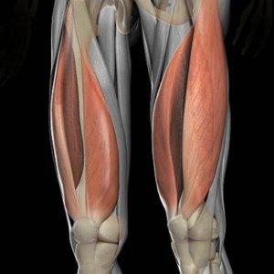 体積の大きいカラダの筋肉①「大腿四頭筋(1913c㎥)」
