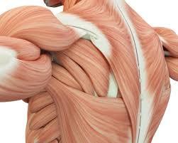 大きな筋肉を鍛えるメリット②「成長ホルモン・テストステロン値の向上」