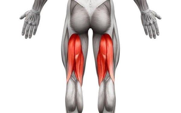 体積の大きいカラダの筋肉⑤「ハムストリング(776c㎥)」