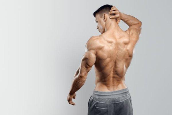 上腕三頭筋は上腕の体積の「2/3」を占める