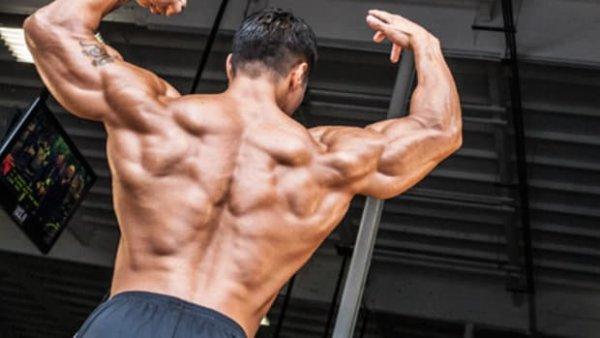 上半身の主要な筋肉⑤「広背筋」