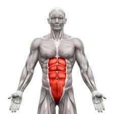 腹直筋の概要