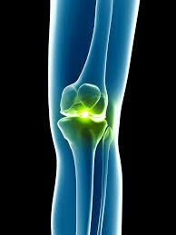 対象筋が異なる理由は「膝関節動作の関与」