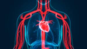 筋トレによって「代謝・血流改善」が促進される理由について