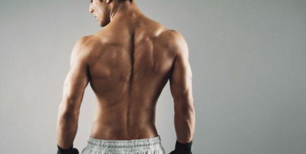 背中の筋肉「背筋群」