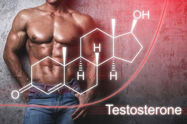 筋肉の合成に必要不可欠な「成長ホルモン・テストステロン」値の向上に期待できる