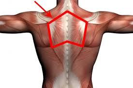 肩こりに関係する部位②「菱形筋」