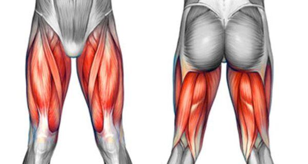脚の筋肉「大腿四頭筋・ハムストリング」