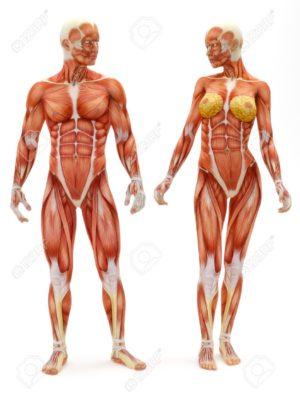 全身運動トレーニングの特徴①「多くの筋肉を鍛えられる」
